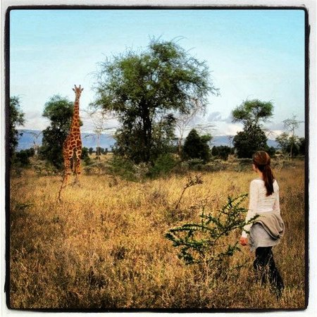 Swara Plains Acacia Camp: Walking with the animals- and birding!
