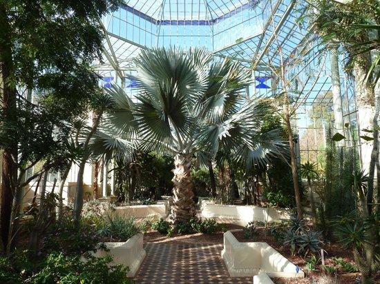 Palm house picture of adelaide botanic garden adelaide for Adelaide gardens