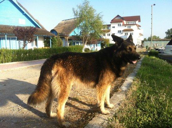 Cormoran Resort : Beautiful german shepherd, a real hotel guardian