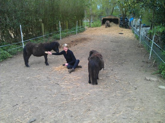 Chateau de Behen : Miniature Horses getting a brushing