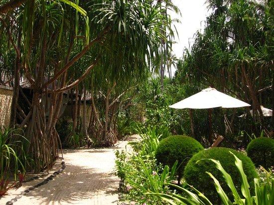 Wakatobi Dive Resort: Resort grounds