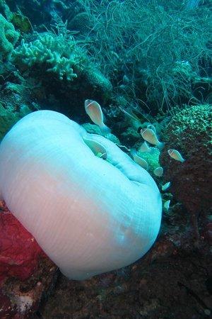 Wakatobi Dive Resort: Underwater life