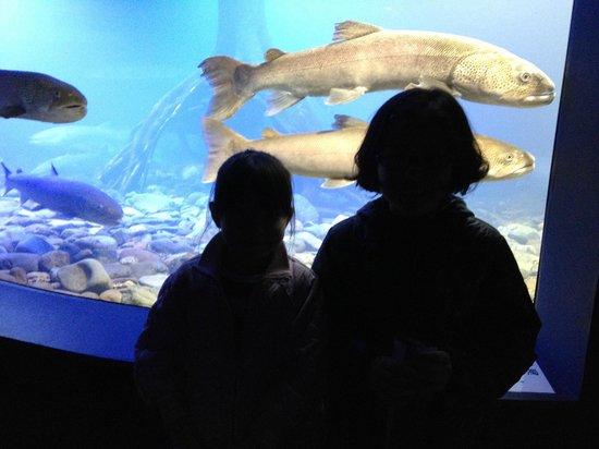 Yama no Aquarium : 大きな魚!
