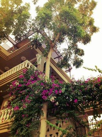 Villa Nile House : hotel
