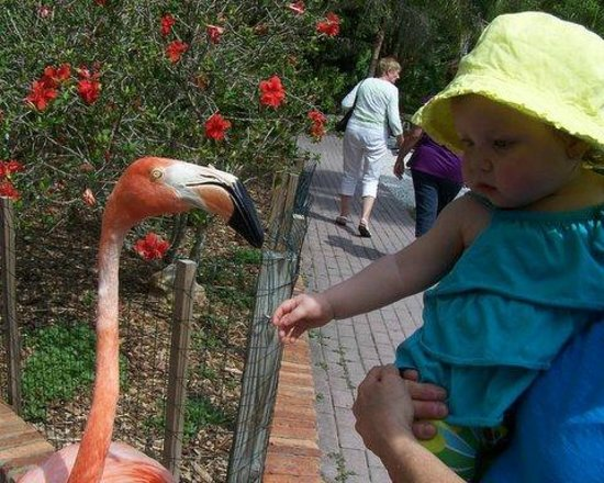Flamingo Picture Of Sarasota Jungle Gardens Sarasota Tripadvisor