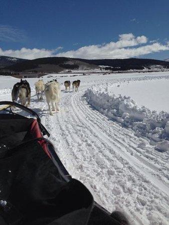 Alpine Adventures Dogsledding: Add a caption