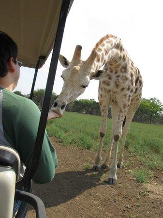 Bergheim, TX: The giraffe was our favorite