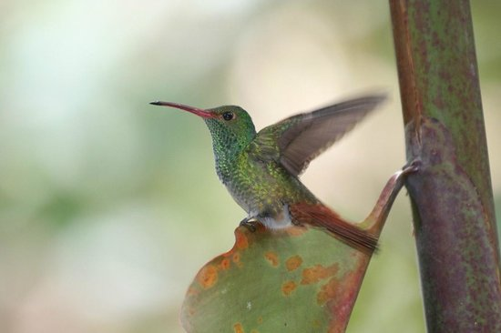 Jade Mar Lodge Cabins: Hummingbird vor der Cabina