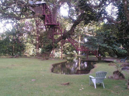 Canopy Lodge The tree house and pool! & Desk and Chair in Room - Picture of Canopy Lodge El Valle de ...