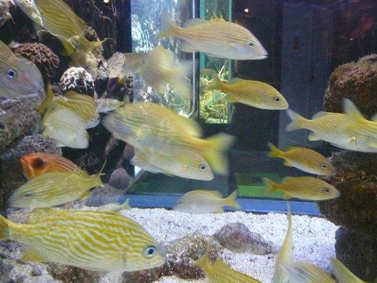 Aquarium de la Guadeloupe: aquarium de Guadeloupe