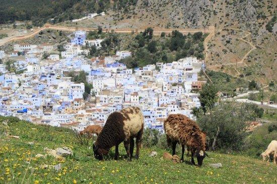 Dar Echchaouen: chefchaouen village in the background