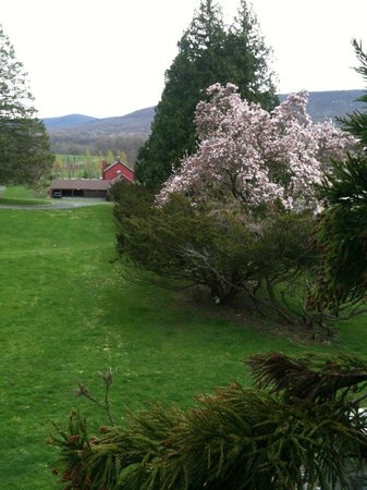 The Storm King Lodge: Beautiful Magnolia Tree in the Spring :)