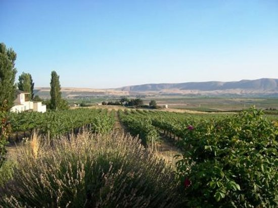Tapteil Vineyard Winery: Facing south