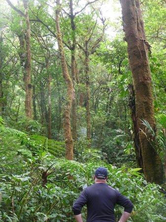 تراب فاميلي لودج: In the Cloud Forest a clearing.