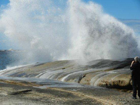 Bicheno Blowhole blowing up a storm!