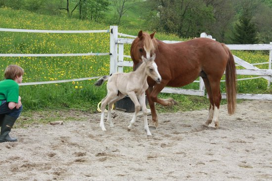 Guesthouse Bad Kilchberg: New Foal May 6th 2013 full of energy