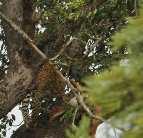 Khaya Umdani Guest Houses: Safari