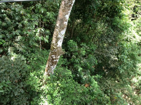 Rainforest Adventures: beautiful green rainforest