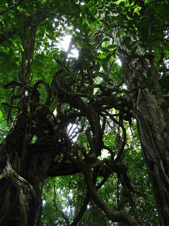 Brownsberg Nature Park: Splendid flora!