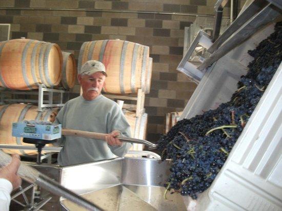 Coeur d'Alene Cellars: Syrah grapes at crush