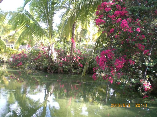 Iberostar Bavaro Suites: The grounds were so beautiful!