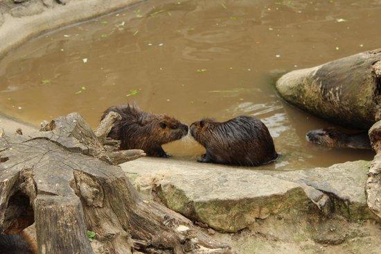 Berlin Zoological Garden : Kissing beavers :)