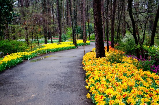 Garvan Woodland Gardens Hot Springs All You Need To Know Before You Go Updated 2018 Hot