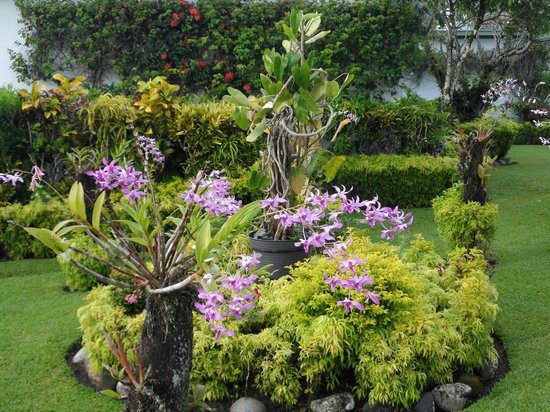 Madang Lodge Hotel: Orchid garden