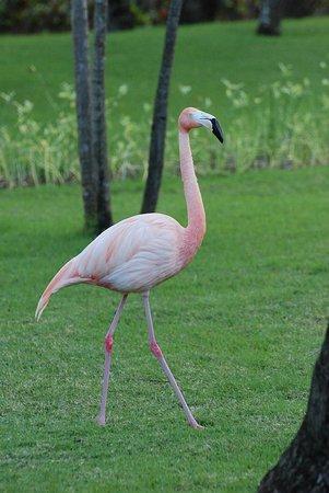 Iberostar Dominicana Hotel: Garden encounters