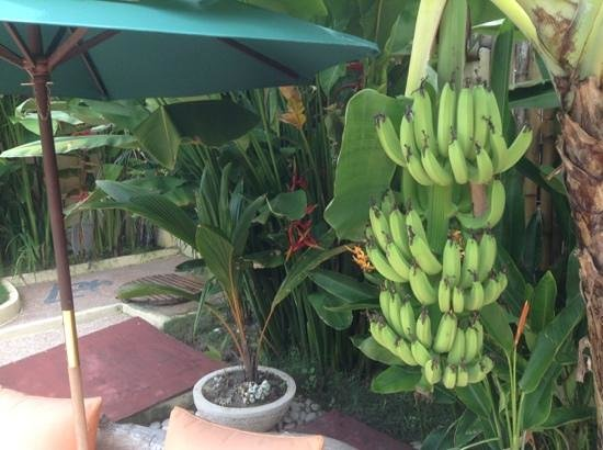 Laguna Gili Beach Resort: hotel bananas