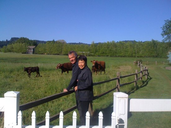 Hopewell Bed & Breakfast: We enjoyed having the cows come trotting up to greet us.