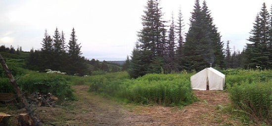 Camp Homer: Picture of the campground.