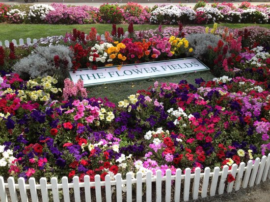 Grand Pacific Palisades Resort and Hotel: Carlsbad Flower Fields