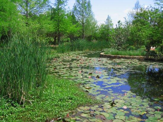 Clark Gardens Botanical Park: Pond with lily pads