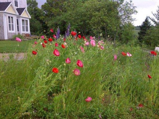Laurel's Bed and Breakfast: My beautiful garden.