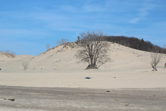 Warren Dunes State Park: I never imagined it would be so much fun climbing a 250' dune