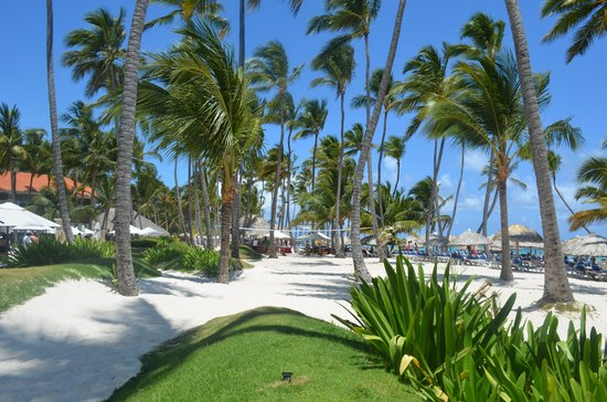 Dreams Palm Beach Punta Cana: Beach View