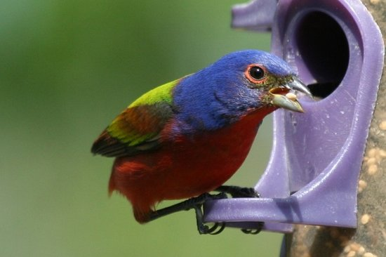 Blue Heron Inn: Mail painted bunting