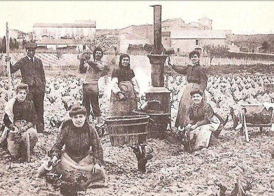 Domaine Castan: Le Musée des Emile: L'histoire de la vigne et du Languedoc