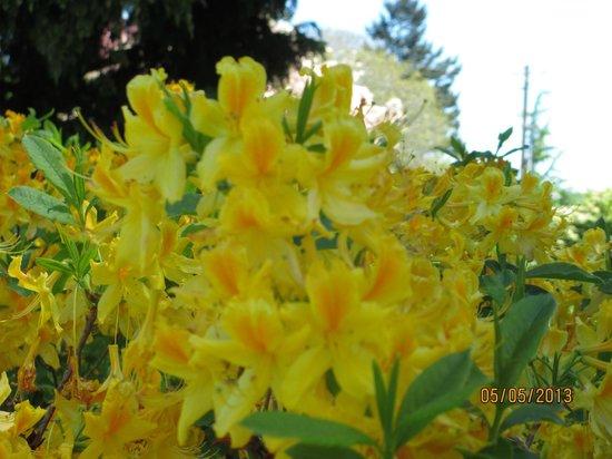 Hulda Klager Lilac Gardens: vibrant flowers