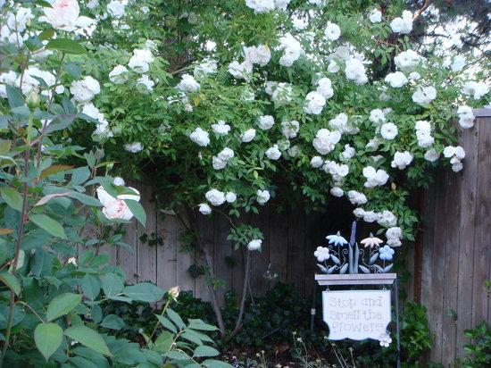 Romeo Inn: Garden