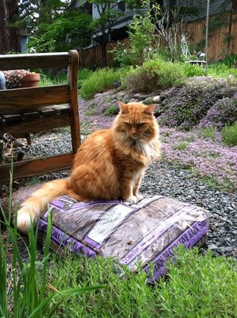 Romeo Inn: Our outdoor cat, Buster