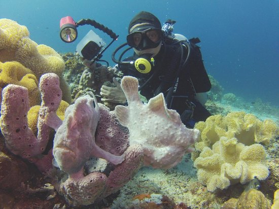 Sogod Bay Scuba Resort: House reef full of friendly frogfish