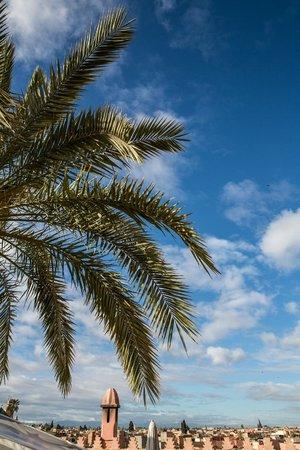 Zamzam Riad照片
