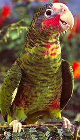 Parrot Preserve