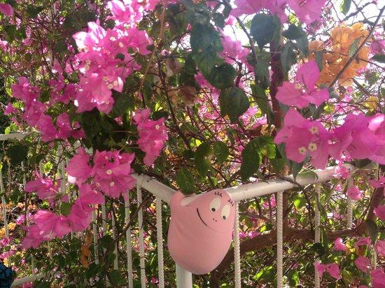 """""""Nuestra Casa"""" Guesthouse : Balcony"""
