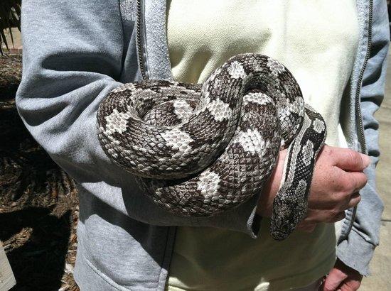 Albany, GA: Rat snake!