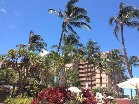 Ka'anapali Beach Club: Grounds