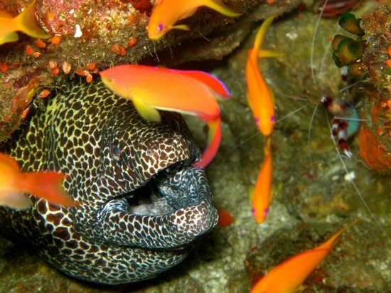 Rubiah Tirta Divers: so handsome sea creature found at Batee Tokong dive site
