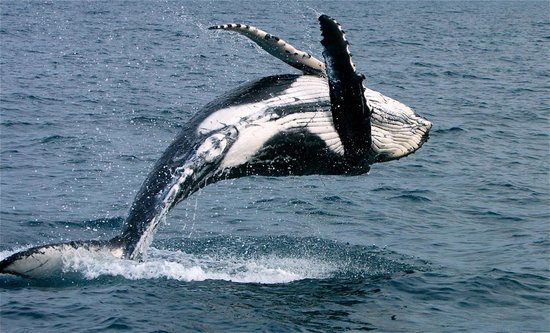 That's Awesome Dusk Patrol Whale Watching Foto